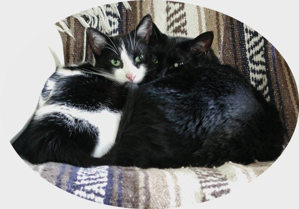 JPG Pic of cats hugging