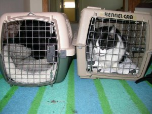 JPG Cats packed in cages